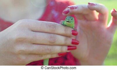 Estilo de vida, naturaleza, asideros, lagarto, verde,...
