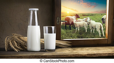 Milk glass and milk jug on the chamomile meadow pasture...