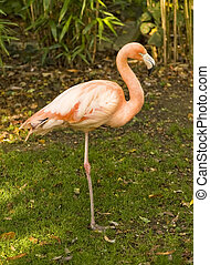 Beautiful portrait of pink flamingo with vibrant colors