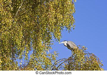 Stunning shot of grey black crowned night heron during day