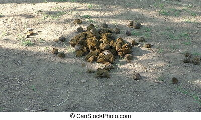 Pile of horse manure on a horse farm