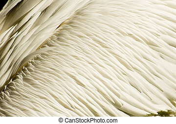 Background texture of great white pelican feathers plumage -...