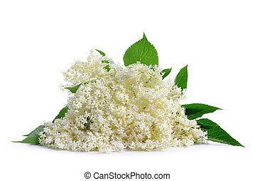 Elderberry flower (Sambucus nigra) isolated on a white...