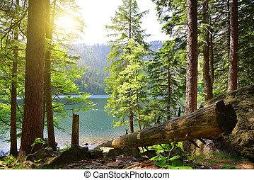 Black lake in Czech Republic. - Black lake is in Czech...
