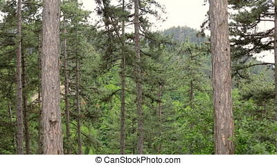 Panning up view of two trees in mountains - Beautiful...