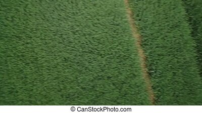 Aerial, Vertical HiSpeed Flight Above High Gras, Closeup,...