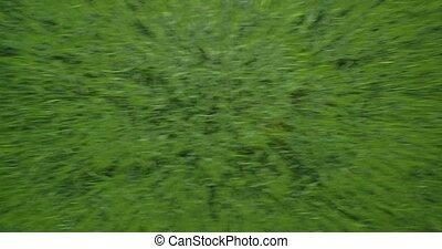 Aerial, Vertical High Speed Flight Above High Gras, Closeup,...