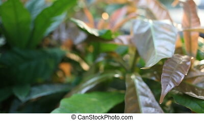 Natural background. Camera moving through colorful foliage...