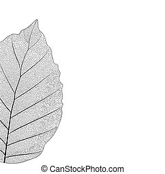 Botanical series Elegant Single detailed partial leaf in...