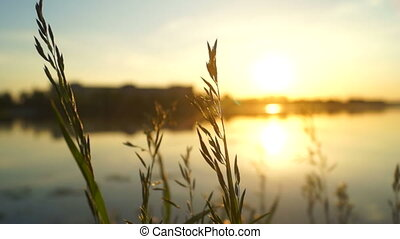 Sun nature sunrise plant - Shot plants on the lake of dawn