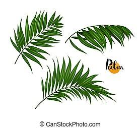 illustration of three palm leaves set