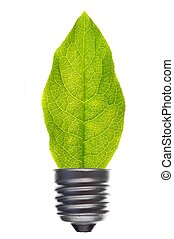 bulb an leaf - green leaf and bulb isolated on white showing...
