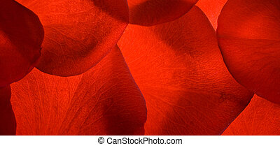 red rose petals closeup background