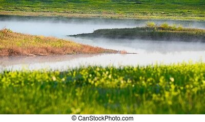 Fog over blossoming meadow with yellow flowers