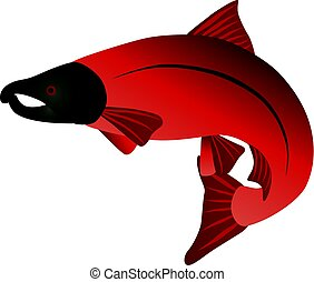 Coho Salmon Color Illustration - Coho Salmon Fish in Color...