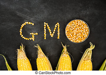 gmo food concepts with many gold corn particles shape and...