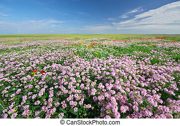 Spring flowers  in meadow. Beautiful landscapes.