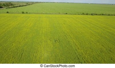 Aerial shot of an agricultural green and yellow field in...