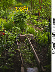 simmer garden with flowers and seedbed close up photo