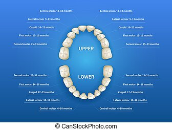 Children mouth with tooth numbering chart on blue
