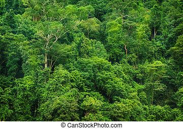 Tropical rainforest view - Tropical rainforest landscape...