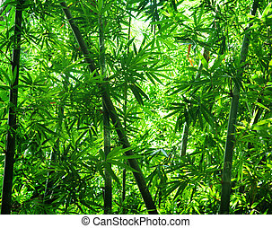 Asian bamboo forest view