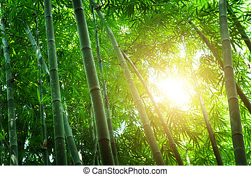 Green bamboo forest - Asian bamboo forest landscape with...