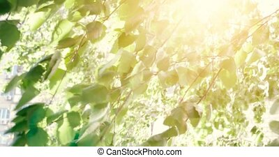 Forest trees leaves. Nature green wood sunlight footage....