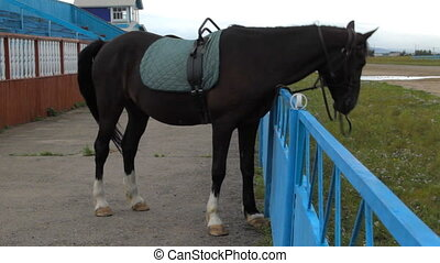 HD Brown horse on a leash scratching neck