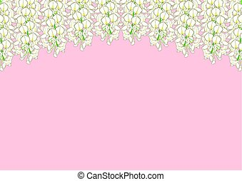 White Wisteria isolated on Pink Background with copy space. Vector Illustration