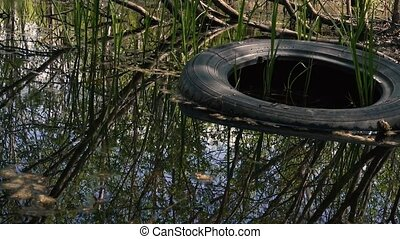 Car tire in the forest water - Car tire in forest water or a...