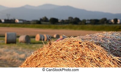 Car model on a round bale - Driving a car model on a round...