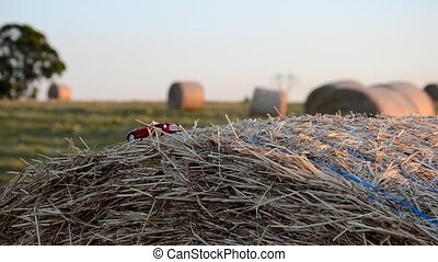 Car on a round straw bale - Driving a car on a round straw...