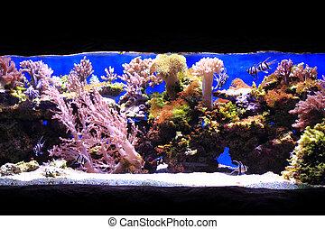 sea aquarium background - life in salt water as nice sea...