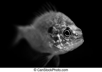 fish - black and white animals portraits