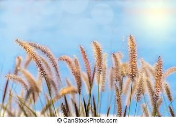 Soft Sea Oats Against Sky - Softened sea oats with blue sky...