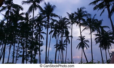 sunrise on the tropical coast with a palm grove,,Time lapse...