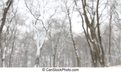 Falling snow In the winter forest