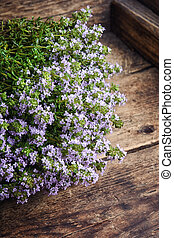 Flowering bush of thyme - Flowering bush of medicinal thyme...