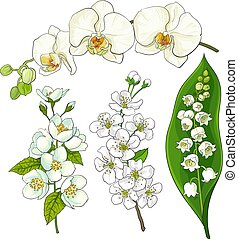 White flowers - lily of the valley, orchid, apple, cherry blossom