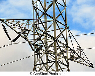 Cormorant colony on the transmission tower