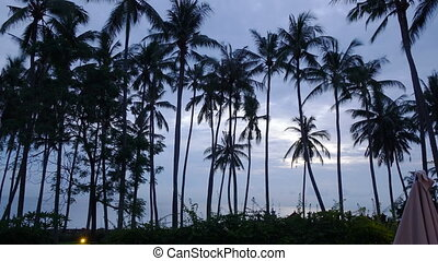 sunrise on the tropical coast with a palm grove,Time lapse -...