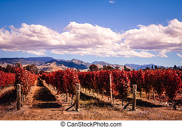 Autumn colorful vineyards in Marlborough wine country, NZ -...