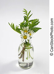 Bouquet of chamomile flowers in glass vase on white background
