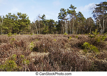Forestry - Woodland - A forestry used wood lays near...