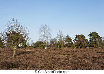 Trees into heathland in spring - Some bald trees stand in a...