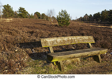 Bench into heathland in spring - A wooden bench stands into...