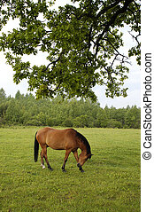 Horse on the field