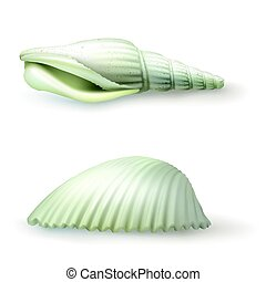 Vector illustration, badges, stickers, seashell in realistic...