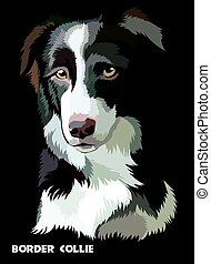 Colored vector Border collie - Colored Border collie...